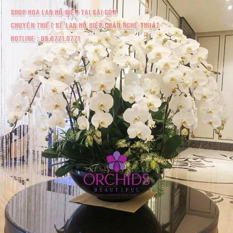 Beautiful Orchids - cửa hàng bán hoa Lan ở TPHCM