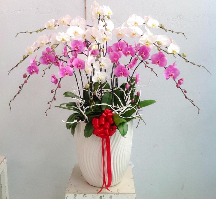 Hương Flower - Hoa Lan Giá Rẻ Tại TPHCM