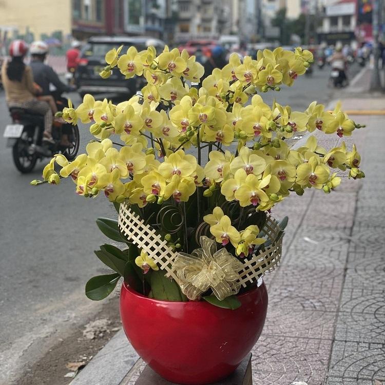 Lan Hồ Điệp ORCHIDS WORLD - địa chỉ bán hoa lan đẹp