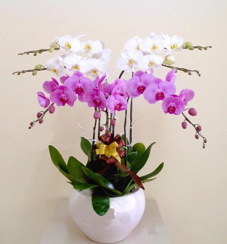 Love Flowers Shop là shop bán hoa lan ở TPHCM đẹp
