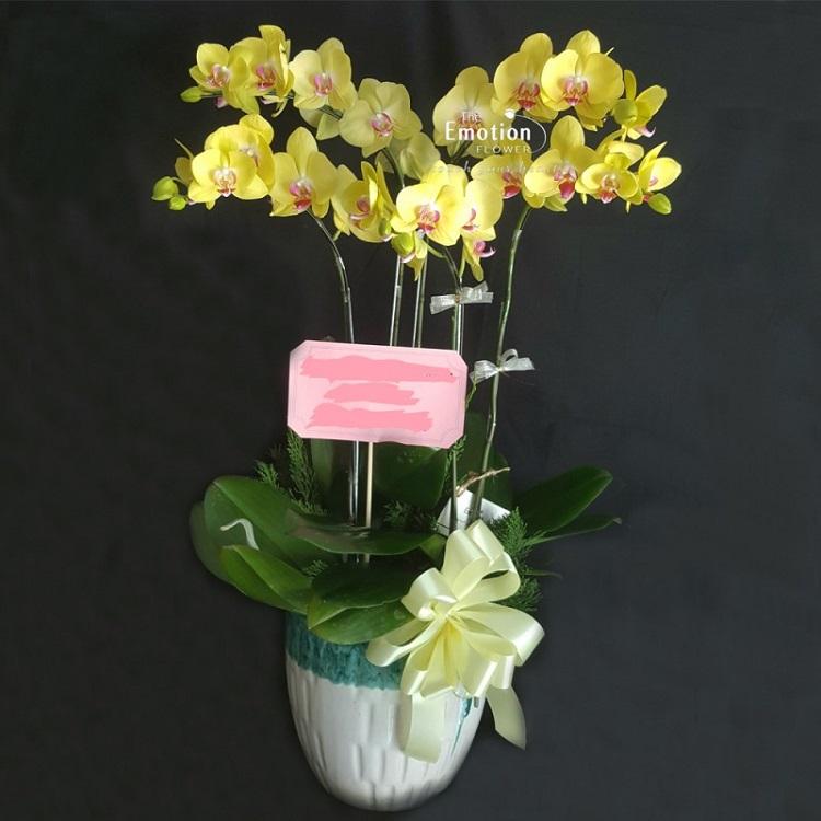The Emotion Flower - Cửa Hàng Hoa Lan TPHCM