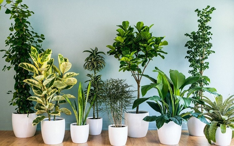 Vườn Gốm Việt – nơi bán chậu cây cảnh tại TPHCM