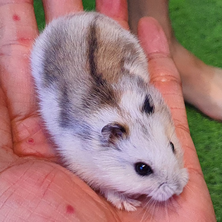 Hamster shop miền đất hứa