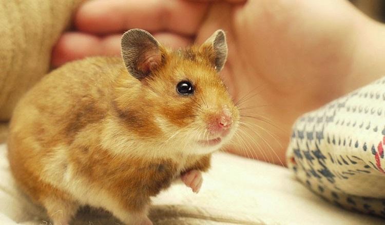 Yahoo shop - shop hamster TPHCM